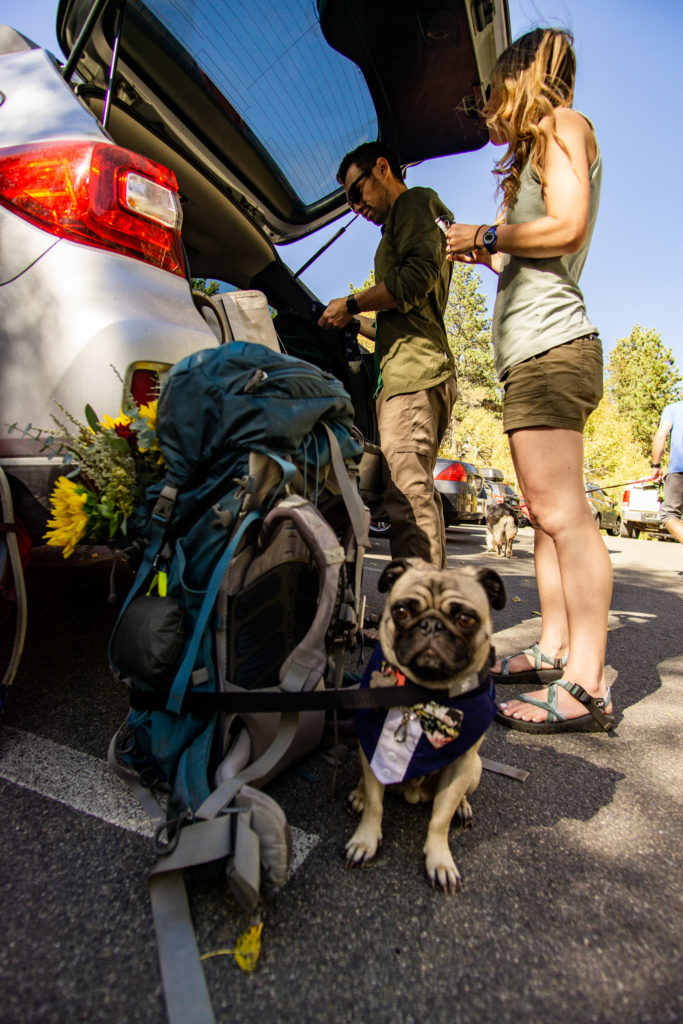 Couple getting ready for a hike at the trunk of their car. A backpack and a pug are sitting on the ground near their feet.