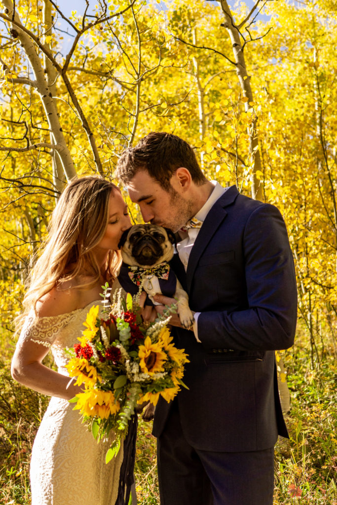 A bride and groom standing in front of a backdrop of yellow aspens in this fall mountain wedding. They're holding their pug and kissing its head.
