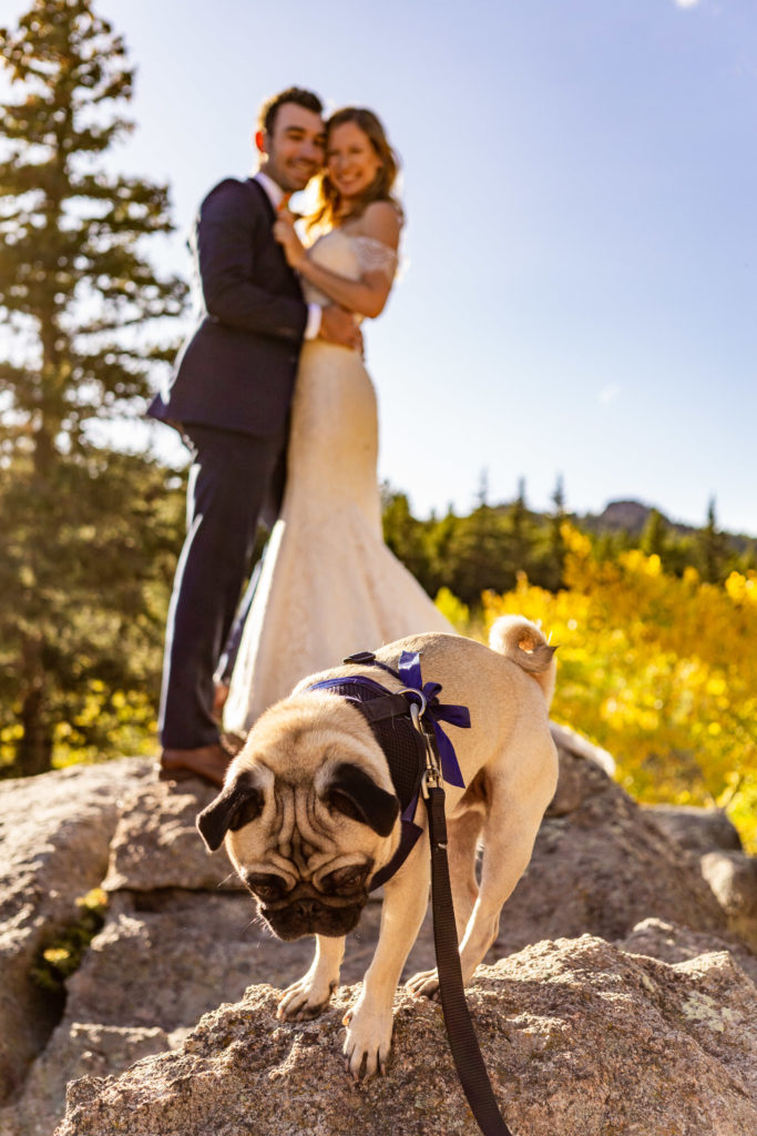 Groom hugging bride from behind as they laugh. They're standing on top of a boulder while looking down at a pug on a lower boulder.