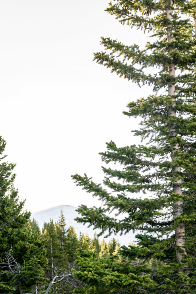 A peak of mountaintop through the trees. Photo by Gabby Jockers Photography. Same sex wedding, lesbian elopement, lesbian wedding, lgbt elopement, lgbtqia wedding, lgbt wedding, colorado elopement, colorado elopement photography, berthoud pass, sunrise elopement, hiking elopement, spring wedding, mountain wedding, adventure photos, mountain elopement, spring elopement, adventure elopement, denver colorado photographer, elopement photographer