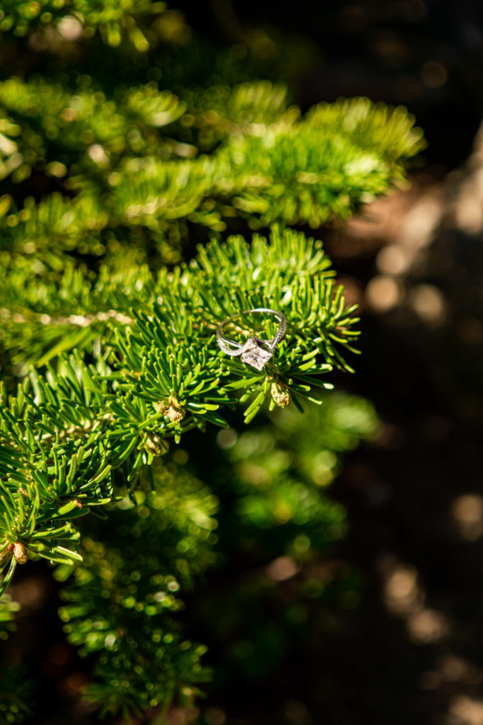 A beautiful engagement ring perched on a pine branch. Photo by Gabby Jockers Photography. colorado engagement photography, colorado engagement photos, colorado engagement session, brainard lake engagement photos, brainard lake engagement session, colorado photography, brainard lake engagement photos, mountain engagement photos, lake engagement photos, mountain engagement session, hiking engagement, adventure photos, adventure session, couples photos, morning engagement photos