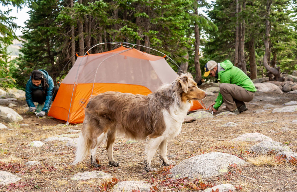 An australian shepherd stands in front of a tent while the couple it up. Photo by Gabby Jockers Photography. Colorado elopement ideas, elopement inspiration, elopement ideas, Colorado elopement photographer, Colorado elopement photography, hiking elopement, backpacking elopement, Rocky Mountain national park wedding, rocky mountains, backpacking wedding, camping wedding, fall wedding, adventure wedding, adventurous elopement, mountain elopement, elopement with dog, dog of honor, best dog