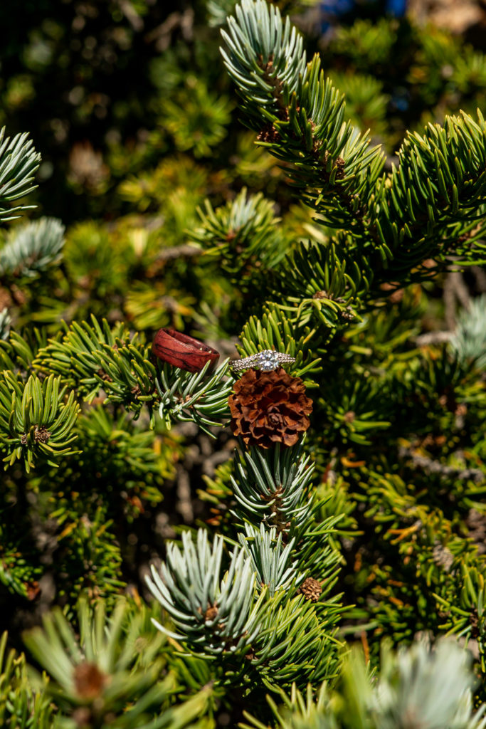 Diamond wedding ring and wooden wedding band propped on a pine tree. Photo by Gabby Jockers Photography. Colorado elopement ideas, elopement inspiration, elopement ideas, Colorado elopement photographer, Colorado elopement photography, hiking elopement, backpacking elopement, Rocky Mountain national park wedding, rocky mountains, backpacking wedding, camping wedding, fall wedding, adventure wedding, adventurous elopement, mountain elopement, elopement with dog, dog of honor, best dog